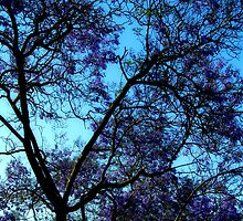 Silhouetted Jacaranda Branches Frame the Sky by Ivana Redwine