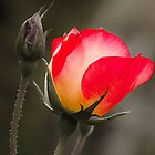 for you by Jessy Willemse