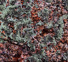 'Pink Granite & Lichen Abstract' by Scott Bricker