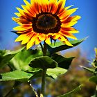 Sunflower Dreams by Linda Curty