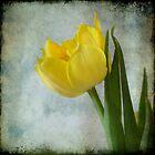 Textured Tulip by Colleen Drew