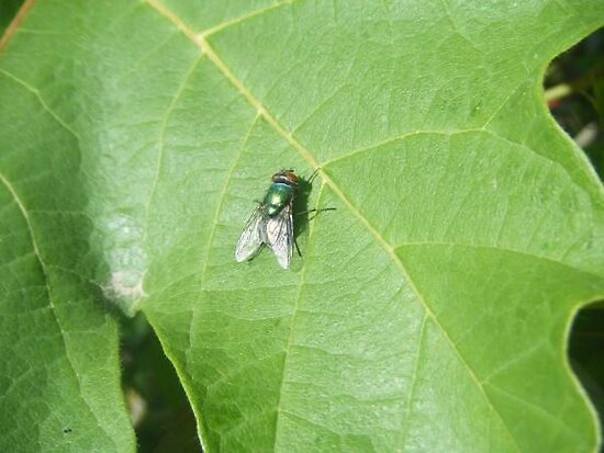 Fly On A Leaf by Ashely  Hendrickson