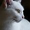 Cat Portraits Challenge