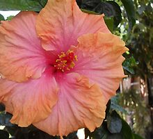 Hibiscus by AlieW
