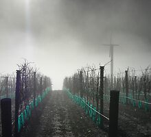 Derelict Vineyard by marklincoln