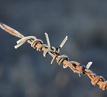 Cold wire by Mark Horton