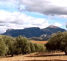 View Through the Olive Grove by jacqi