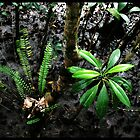 RAINFOREST CLOSEUP NO 2 by mm1208