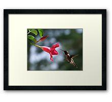 Flying Jewel Framed Print