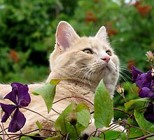 Posing In The Flowers by jacqi