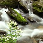 Babbling Brook by itsmymoment