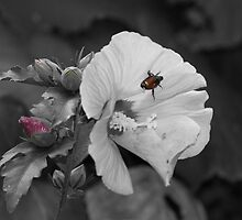 Japanese Beetle on Flower by itsmymoment