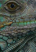 Iguana Eye by avocet