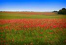 Poppy Field - Ukraine by Yuri Lev