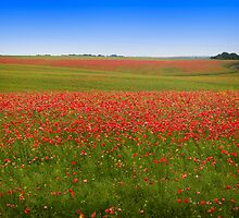 Poppy Field - Ukraine by Yuri Lev