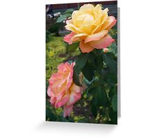 A Rose is a Rose 6 Greeting Card