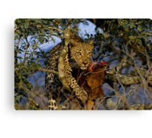 Leopard with prey Canvas Print