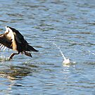 Walking on Water  by helmutk