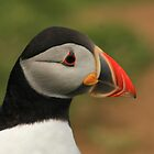 british wildlife by springbob