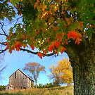 hdr old barn autumn leaves by Jamie Roach