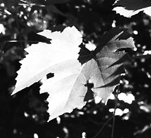 Grape Leaf by Kjakway