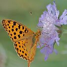 Butterfly on right position (High Brown Fritillary butterfly) by Meeli Sonn