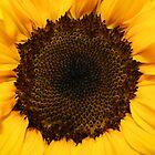 Sunflower Face by TickerGirl