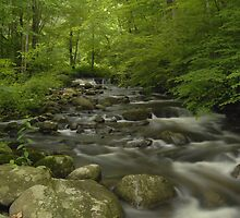 Forest Stream In Spring by Stephen Vecchiotti