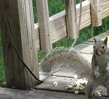 Put up your dukes!!!!  This popcorn is MINE!!!   by maxy