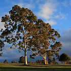 Gums in Winter by rjpmcmahon