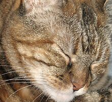 Cat Sleeping by Donna Grayson