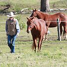 Diamond & Stetson by Cathie Brooker
