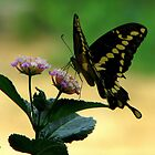 Lantana and the Butterfly by DottieDees