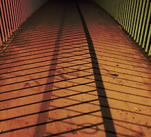 shadows of the fence by flogs