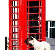 Ewe Rang? by Rachel Lilly