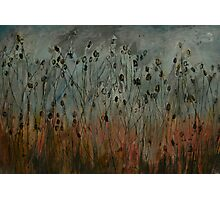 teasel field Photographic Print