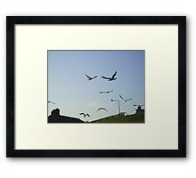 the gulls are in town ! Framed Print
