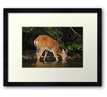 Enjoying the Lake Framed Print