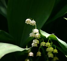 Lily of the Valley  by Alyce Taylor