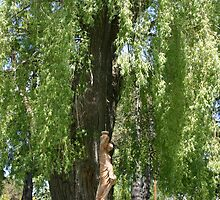 Under the Willow Tree by Alyce Taylor