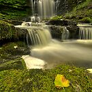 Scaleber Force by AntonyB