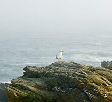 Conanicut Island Series - What A Seagull Sees -2009.07.28 by Jack McCabe