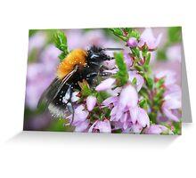 Bumble bee in Heather Greeting Card
