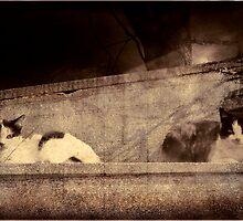 Two Cats by Igor Giamoniano
