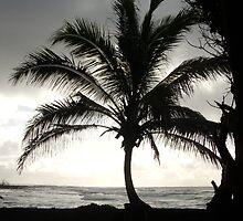 Coconut tree by Hannah Fenton-Williams