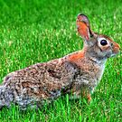"""Ready for the Bunny Hop"" by Larry Trupp"