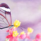 ~Love's Wings~ by Janitka