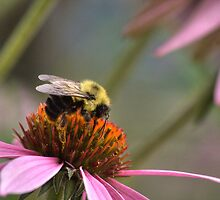 Bumble Bee by Jeff VanDyke
