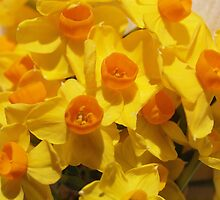 Cacophony in Yellow by Aileen David