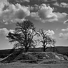 Trees on a Hill by Jason Bran-Cinaed